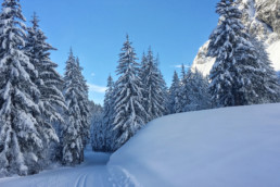 Cross country ski tracks through the forest in Champagny